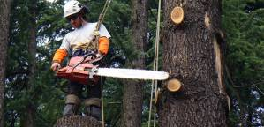 Arboriculture, chainsaws and a love for trees!