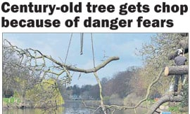 Worcester News Article: Century-old tree gets chop because of danger fears