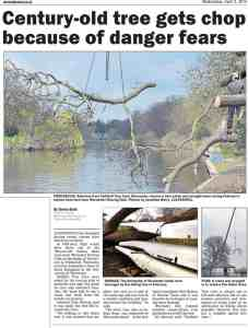 Worcester News Article - Indian Bean Trees & Faithful Tree Care