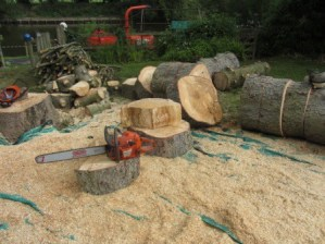 Tree Surgeons - worcester chainsaw