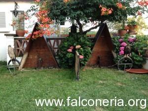 Falchi in giardino