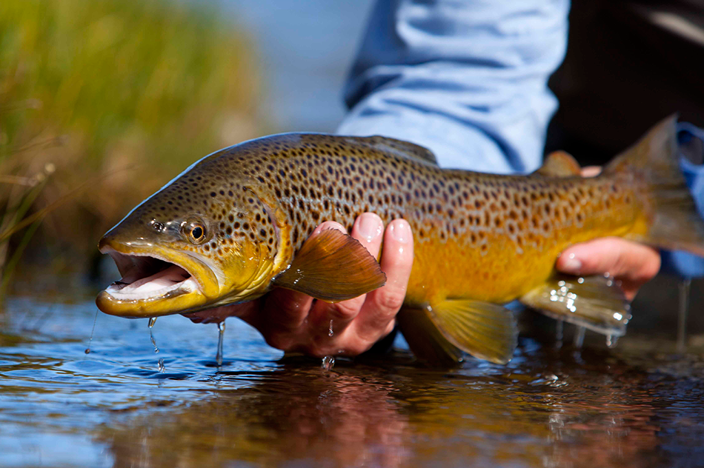 Utah Fly Fishing Lodge