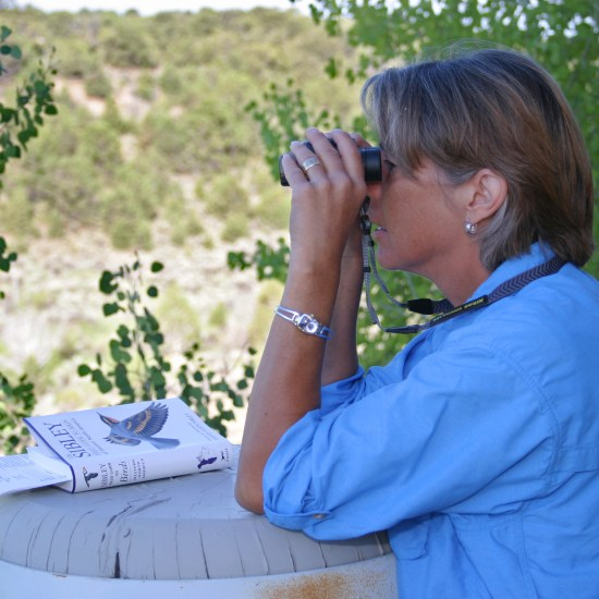Utah Bird Watching at Falcon's Ledge