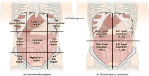 regions of the abdomen