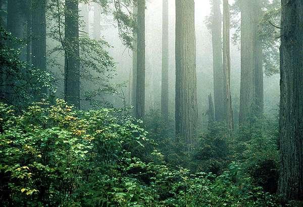 fog with plant community