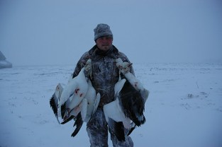 Spring Goose Hunt - Falling Skies Guide Service