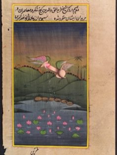 Fallo Indiano - Indian Phallus