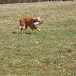 Running back with the retrieve