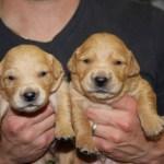 2 boys 2 weeks old