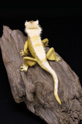 Gecko_PaperArt_Faltmanufaktur_TinaKraus_CrepePaper_Sculpture_Artwork07