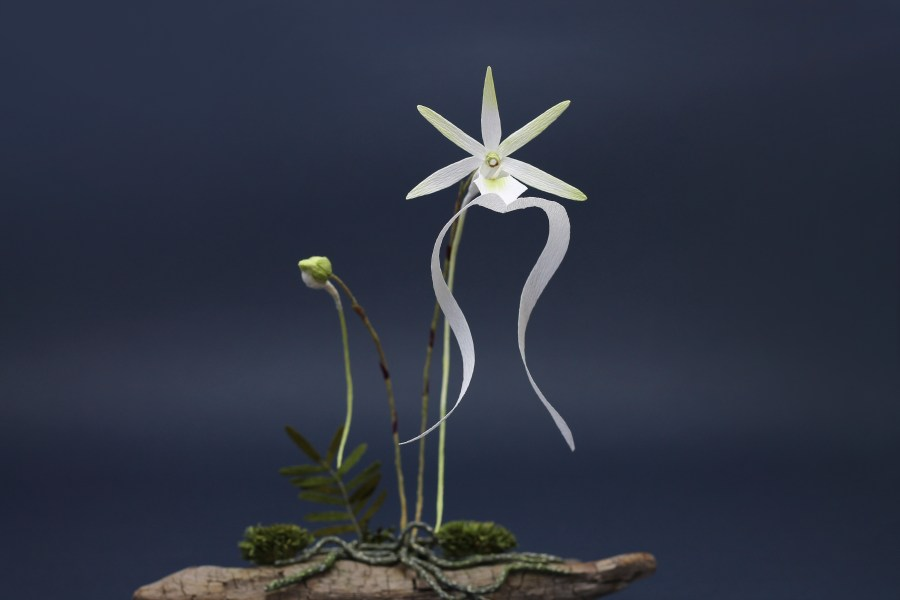 Ghost Orchid Paper Sculpture