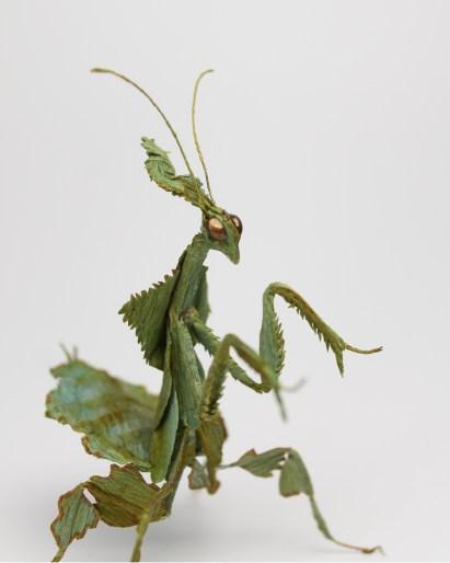 Crepe Paper Orchid Mantis