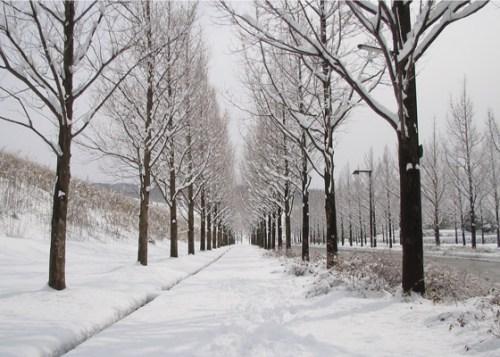 雪天感想(圖)