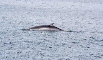 Walvis gespot bij nova scotia