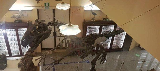 Visita al museo universitario di Chieti con bambini