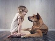 Harmónia vdomácnosti alebo zoznámenie detí adomácich miláčikov