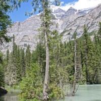 Wandern am Mount Robson - Das Überflutete links ist der Wanderweg...