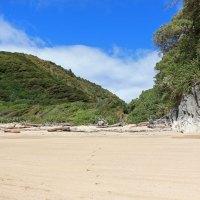Dichter Dschungel bis an den Strand - am Taupo Point