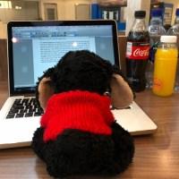 Ich bei der Arbeit am Flughafen Bodo - die Getränke mussten vor dem Check-In alle noch weg...
