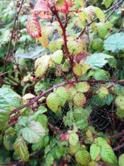 Spinnennetz. An Tau.