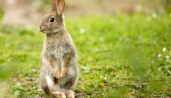 Tur Kaninchenstall Bauen