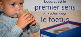 L'odorat est le premier sens que développe le foetus
