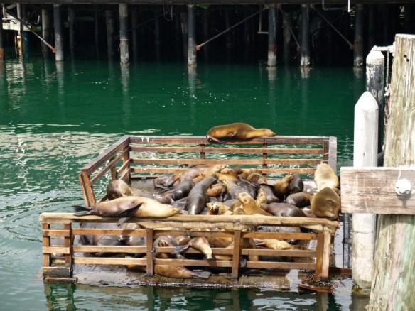 Monterey, sea lions