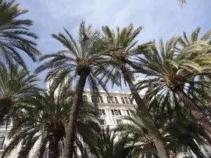 La famille nomade et l'esplanade d'espagna et ses palmiers
