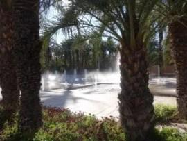 Une autre vue du  jardin municipal d'Elche