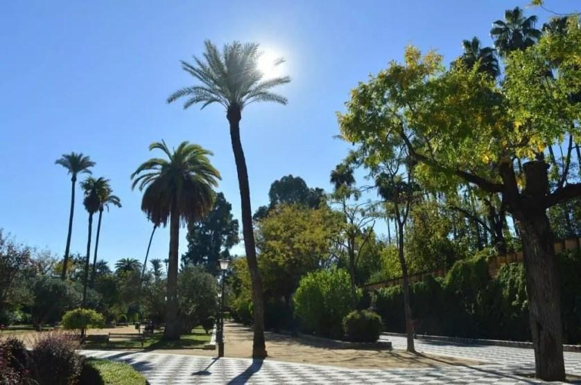 Parc Maria luisa et ses palmiers-seville avec la famille nomade digitale
