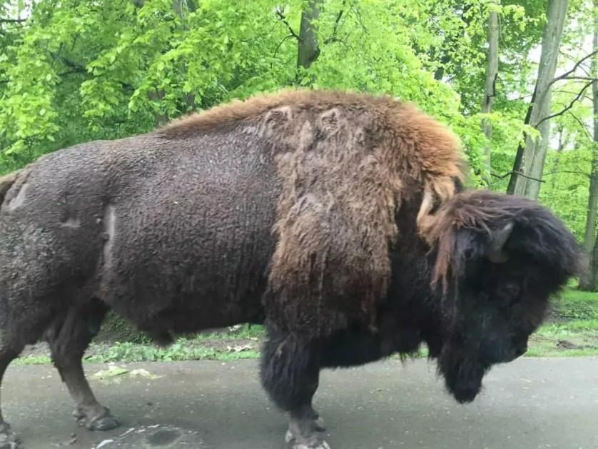 famille-nomade-digitale-Parc-zoologique-de-Thoiry-bufle-sur-la-route