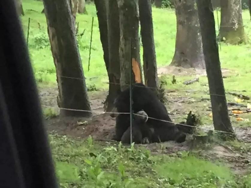 famille nomade digitale-Parc zoologique de Thoiry- ours et ourson