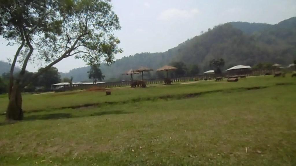 éléphants à Chiang Mai
