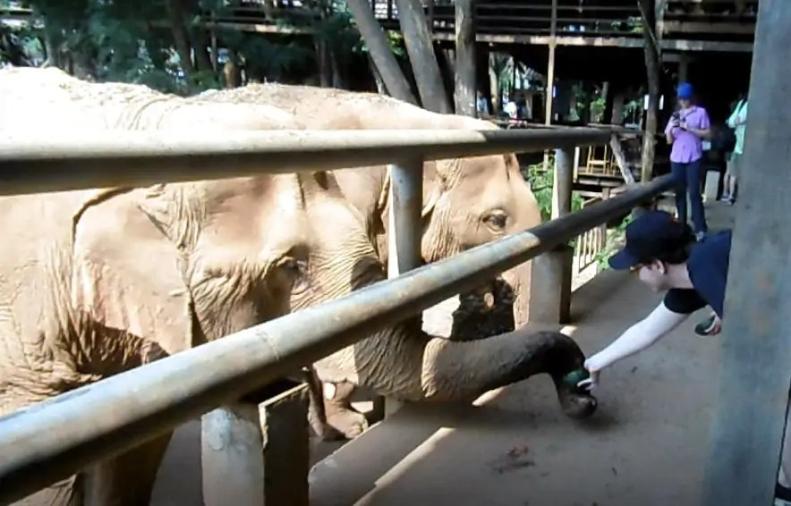 Meilleur refuge elephants Chiang Mai- nourrissage des elephants- Elephant Nature Park-Famille Nomade Digitale