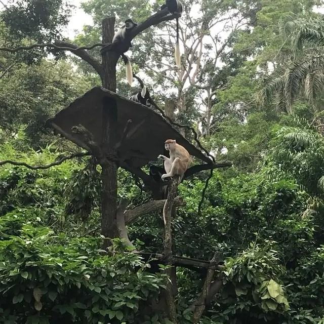Visite du zoo de Singapour-famille nomade digitale