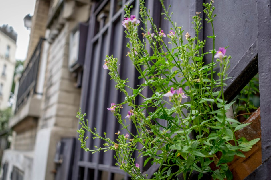 fleur villa Lea,ndre