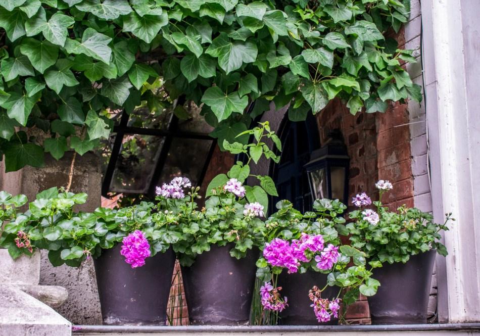 fleur villa Leandre