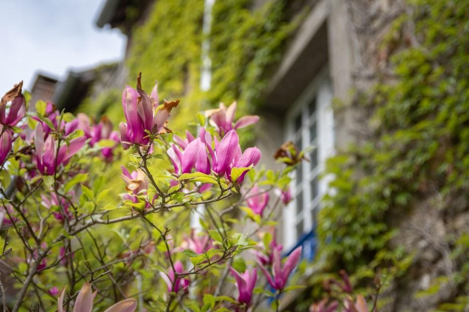 Les fleurs du moulin de Dannemois