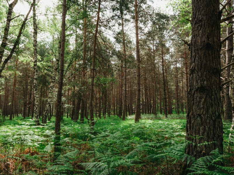 forêt de Fontainebleau