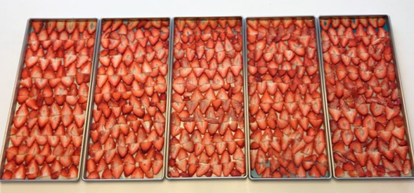 strawberries in fd trays