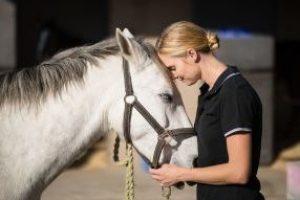horses that heal