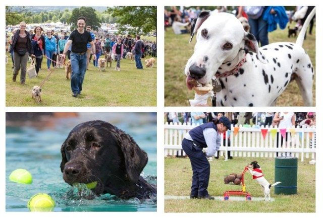 DogFest 2016 SuperVet Family Clan Blog