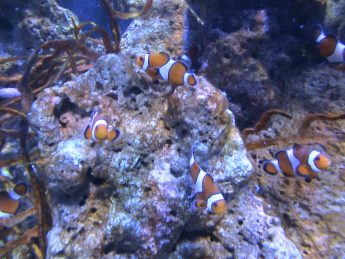 Blackpool Sea Life Family Clan Blog