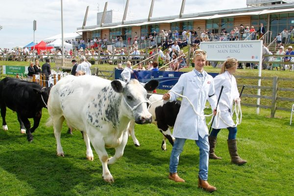 Cattle parade at last year's Lincolnshire Show