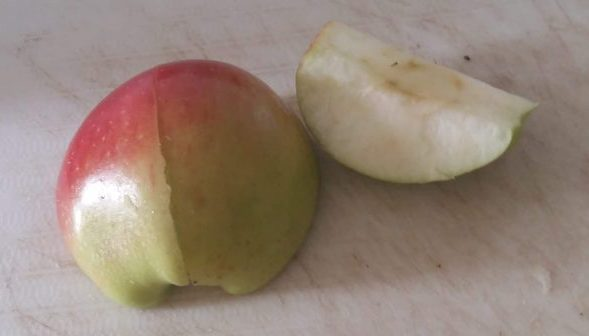 First Pick of Apples from Our 50p Tree Juicy Apple