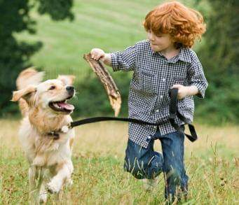Consejos para una relación feliz entre niños y perros