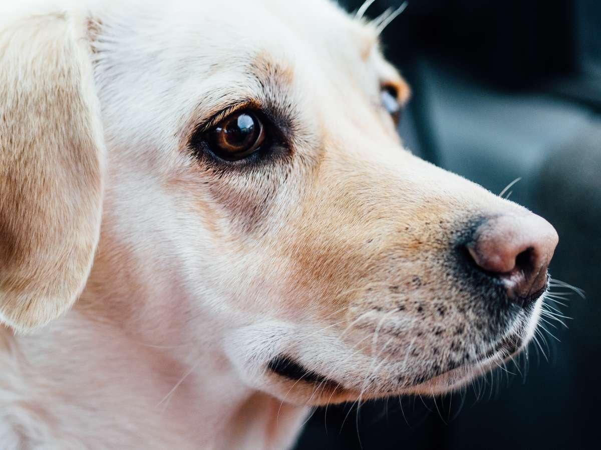 What Kind Of Dog Should We Get Dog Breeds For Kids