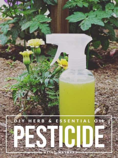 Herb-and-Essential-Oil-Pesticide-DIY