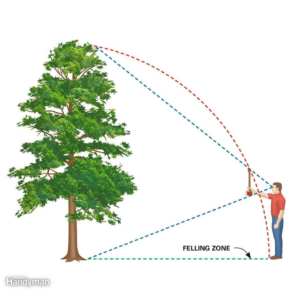 medium resolution of estimate the felling zone how to fell a tree in the direction you want