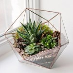 12 Tips For Making A Diy Terrarium How To Build A Terrarium